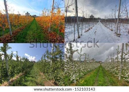 Apple field in four seasons