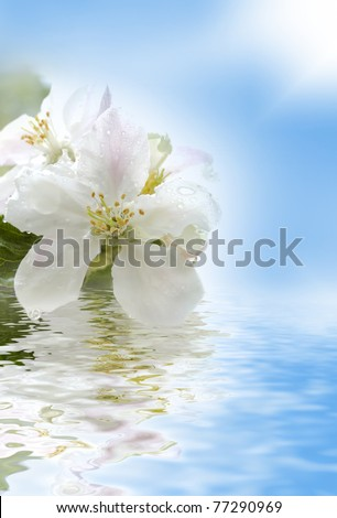 apple flower against blue sky reflecting in water