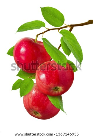 Apple isolated. Three red ripe juicy apples on  branch with green leaves isolated on white background as design for package