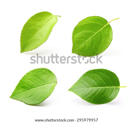 Apple leaves isolated on white background.
