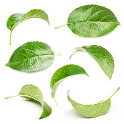 Apple leaves set isolated on white