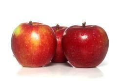 apple macintosh isolated