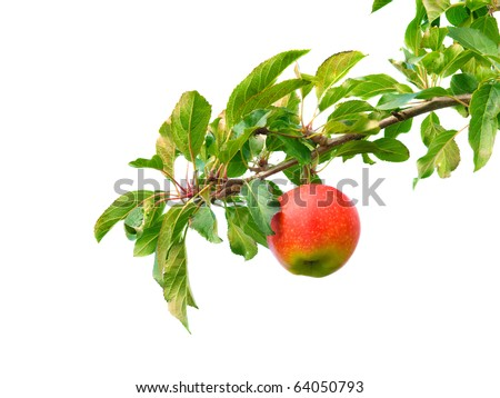 Apple on branch