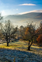 apple orchard in mountains at autumn sunrise. trees with red foliage on frosted grass early in the morning. gorgeous countryside landscape in foggy weather