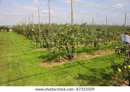 apple orchard with nets to protect against hail and birds