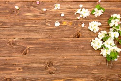 Apple tree blossom flowers on rustic wooden background with copy space.