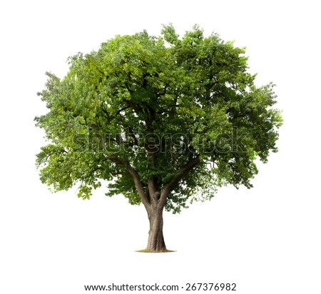 Apple Tree isolated on a white background - Shutterstock ID 267376982