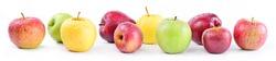 Apple varieties: annurca, stark delicious, fuji, granny smith,