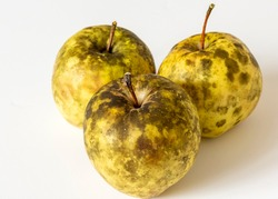 Apples affected by Sooty Blotch fungus