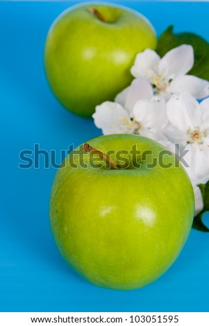 Apples and white flowers on a blue background