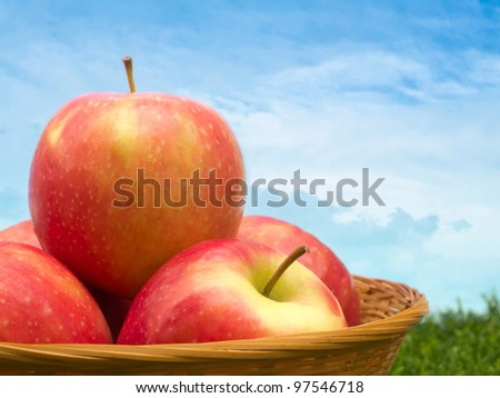 Apples basket in garden against sky background