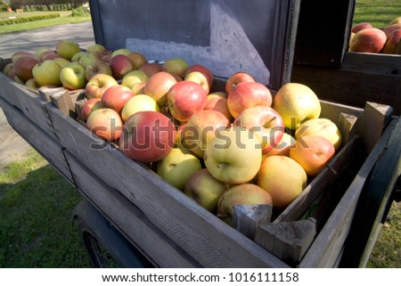 Apples for sale in wooden crates #1016111158