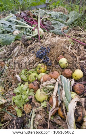 Apples,grapes and different vegetables on a compost heap