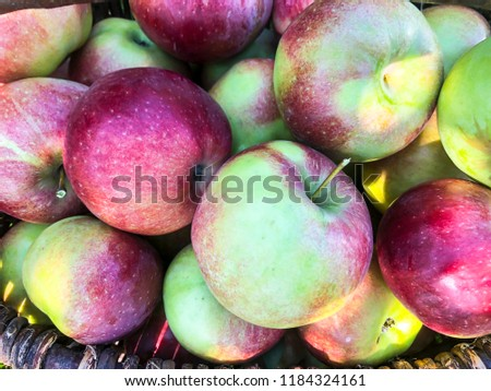 Apples in a basket on the grass. Autumn harvesting concept. Outdoor Photo