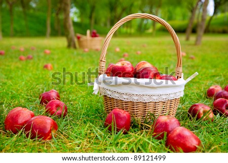 apples in basket on a grass trees field in red color