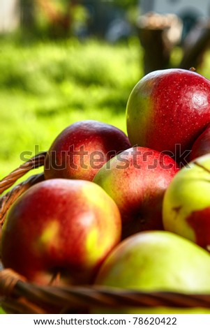 Apples in the Basket. - stock photo