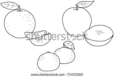 tangerine coloring pages | Apples, Oranges And Tangerines: Coloring Illustration Of ...