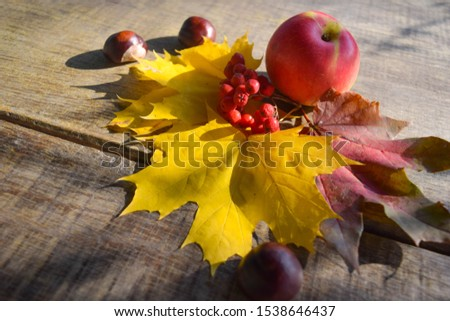 Apples, rowan, chestnuts and autumn maple leaves on old grunge wooden background.Red, Yellow and orange colors. Autumn concept. Majestic Autumn. #1538646437
