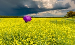 Approaching thunderstorm to blossoming rapeseed field, concept of weather forecast and eco-tourism that is targeted at human health maintenance