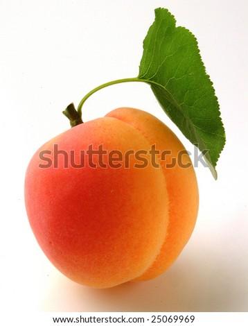 apricot - stock photo