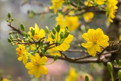 Apricot blossom is a symbol of the New Years of Vietnamese people. The flowers bloom during the days of the New Year and bring luck to people.