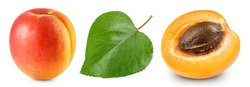 Apricot leaves isolated on white background. Apricot Clipping Path. Apricot collection