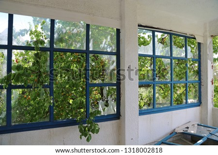 Apricot tree and windows in abandoned hotel #1318002818