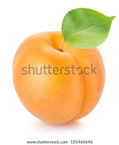 Apricot with leaf