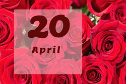 April 20th. Day of 20 month, calendar date. Natural background of red roses. A bouquet of dark red roses.