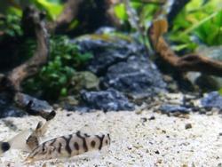 Aqua scape fresh water on aquarium