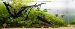 Aqua scape Nature Aquarium Plant and Fish Tank 1