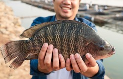 Aquaculture farmers hold quality tilapia yields in hand, guaranteeing integrity in organic bio-aquaculture. Commercial aquaculture in large rivers in Asia. Fish is a high-quality protein food source.