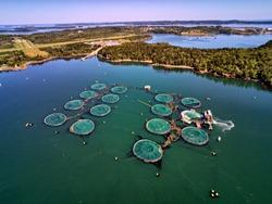 Aquaculture moving a sea lice Barge