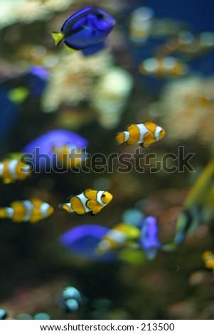 aqualium long beach, california