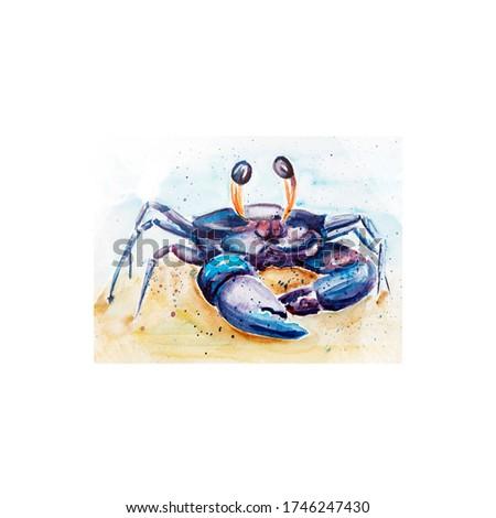 Aquarelle painting of crab sketch art illustration