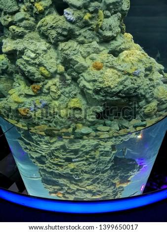 Aquarium and Marine organisms, marine life #1399650017