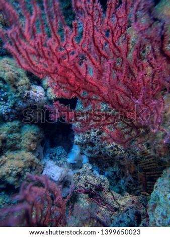 Aquarium and Marine organisms, marine life #1399650023