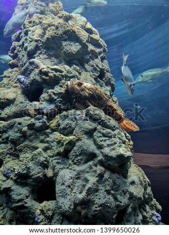 Aquarium and Marine organisms, marine life #1399650026