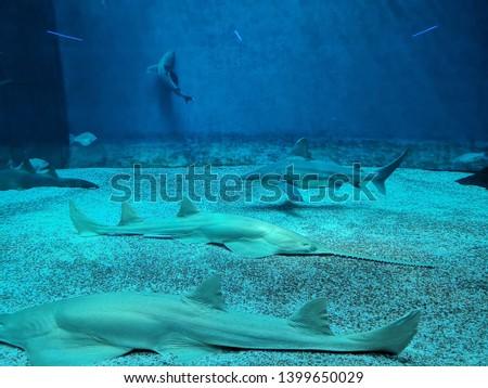 Aquarium and Marine organisms, marine life #1399650029
