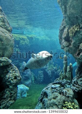 Aquarium and Marine organisms, marine life #1399650032