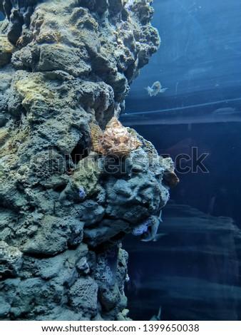 Aquarium and Marine organisms, marine life #1399650038