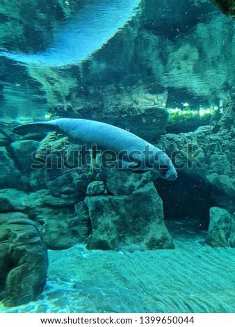 Aquarium and Marine organisms, marine life #1399650044