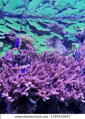 Aquarium and Marine organisms, marine life #1399650047