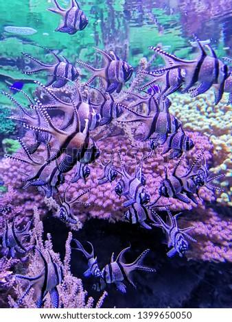 Aquarium and Marine organisms, marine life #1399650050