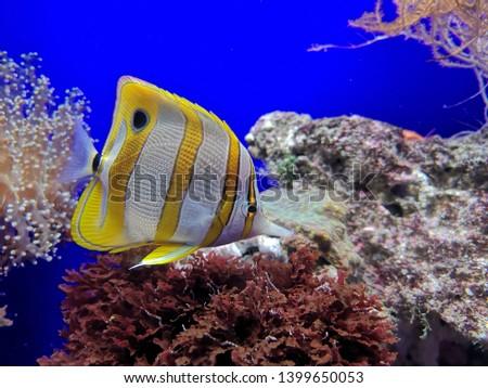 Aquarium and Marine organisms, marine life #1399650053