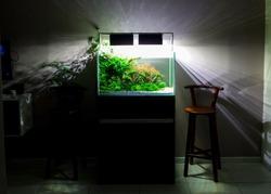 Aquarium aquascape in living room. Modern aquarium aquascape design.