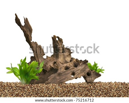 Aquarium background. Driftwood,plant and gravels.
