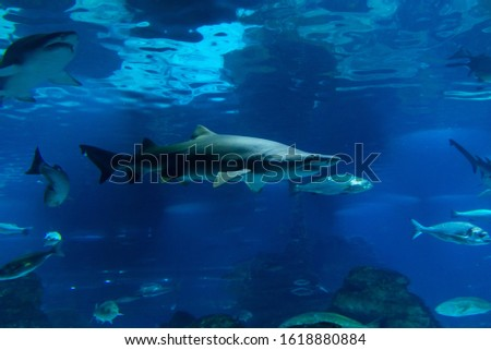 Aquarium Barcelona is an aquarium located in Port Vell, a harbor in Barcelona, Spain. stock photo