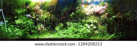 aquarium colorful art