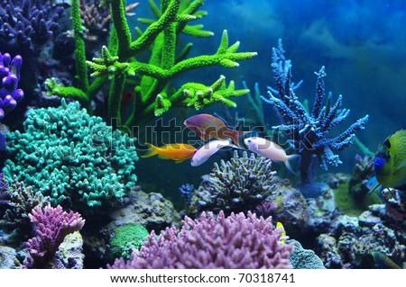 Aquarium corals reef